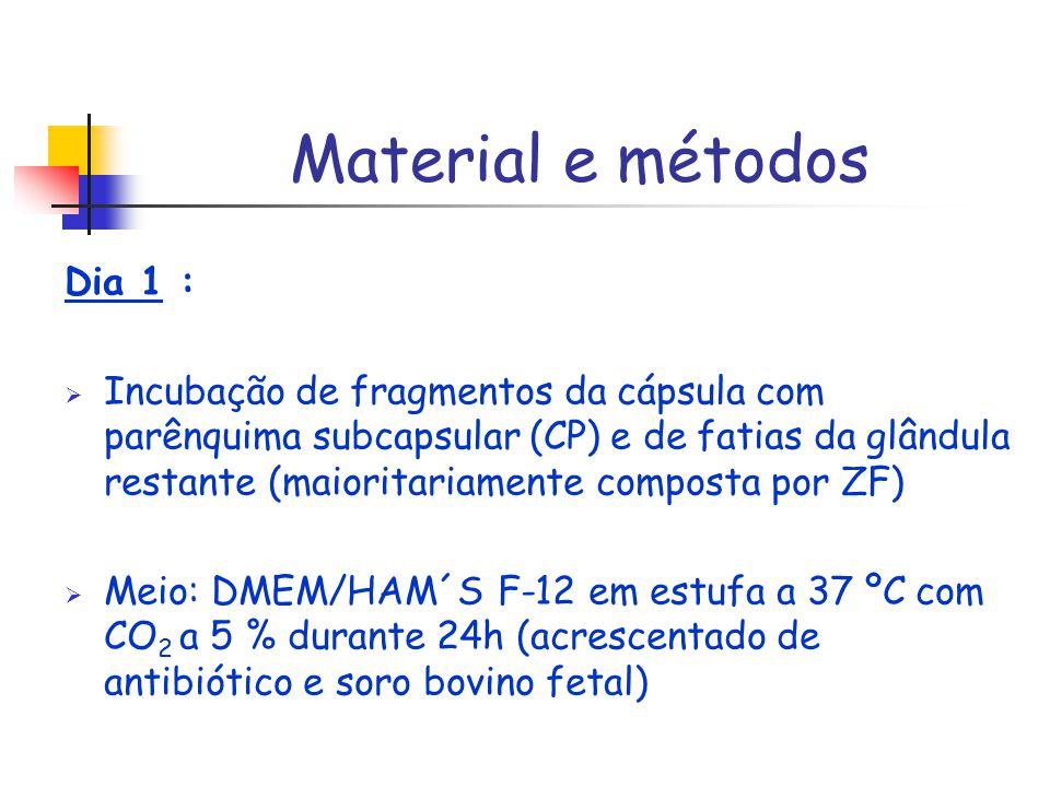 Material e métodos Dia 1 :