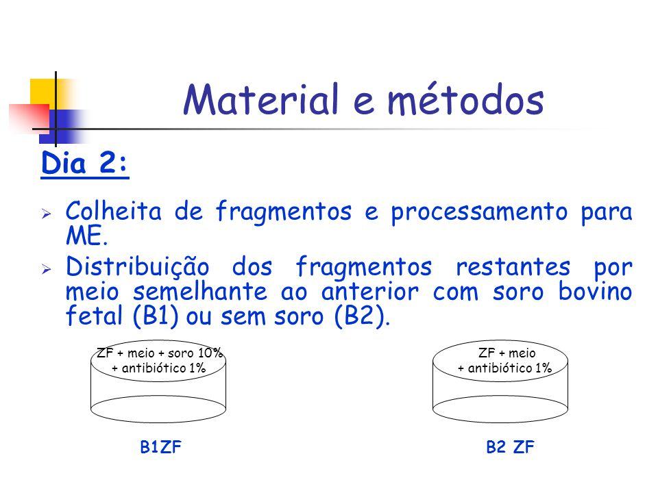 Material e métodos Dia 2: