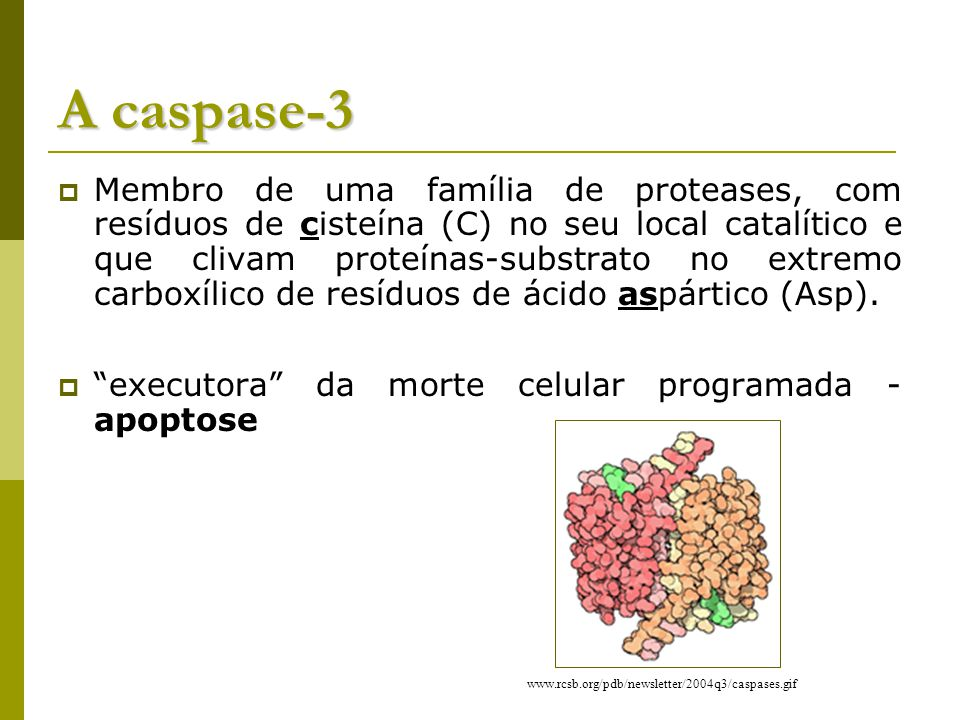 A caspase-3
