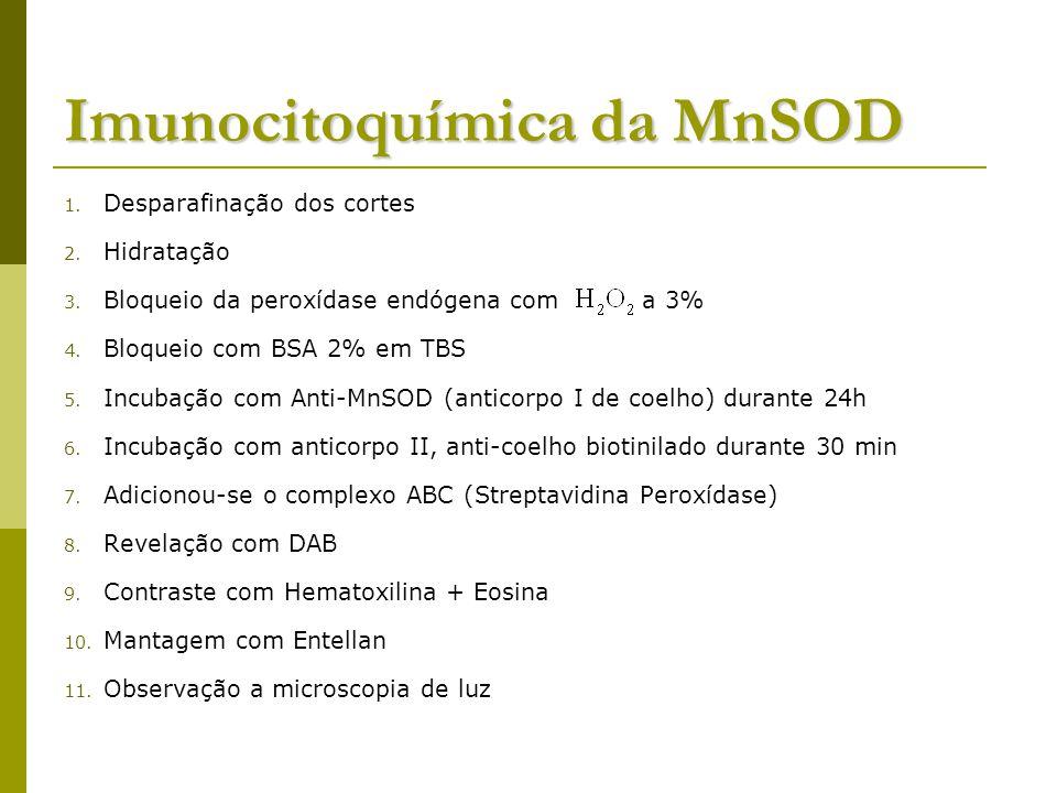Imunocitoquímica da MnSOD