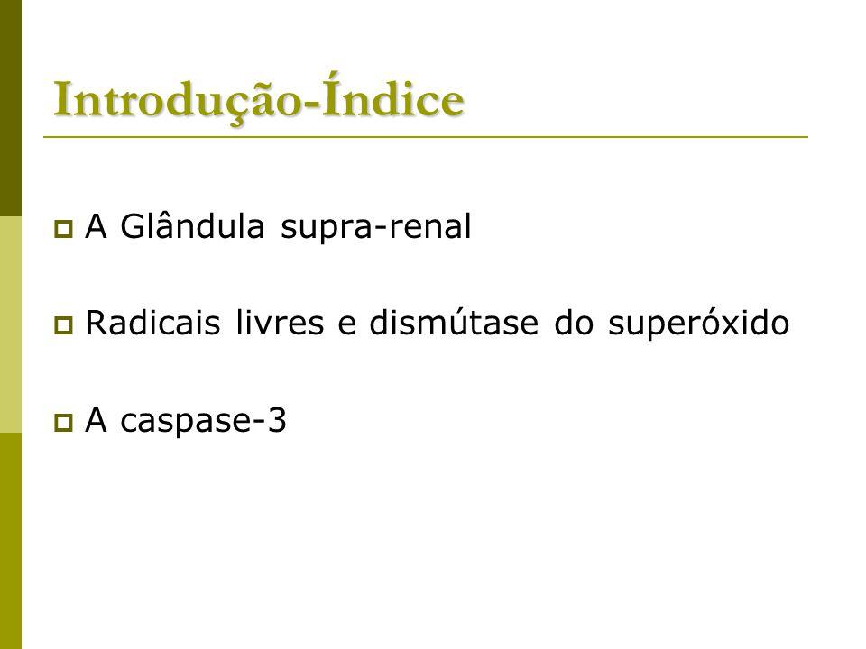 Introdução-Índice A Glândula supra-renal
