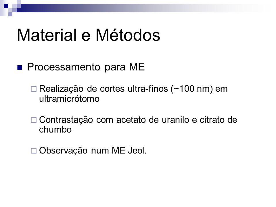 Material e Métodos Processamento para ME