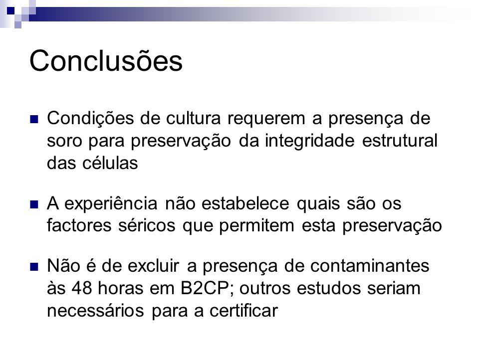 Conclusões Condições de cultura requerem a presença de soro para preservação da integridade estrutural das células.