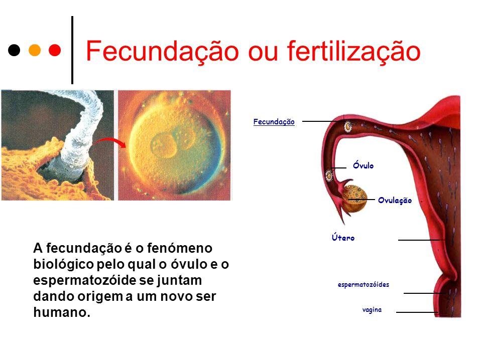 Fecundação ou fertilização
