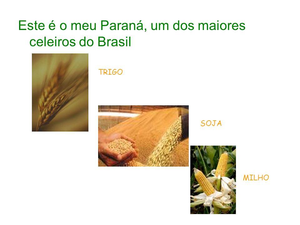 Este é o meu Paraná, um dos maiores celeiros do Brasil