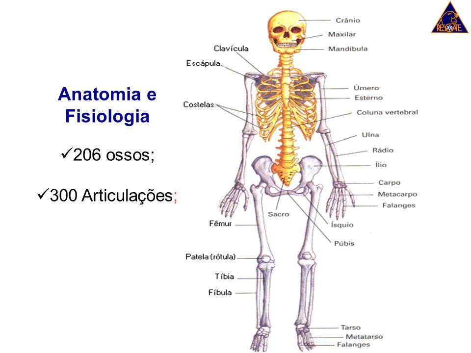 Anatomia e Fisiologia 206 ossos; 300 Articulações;