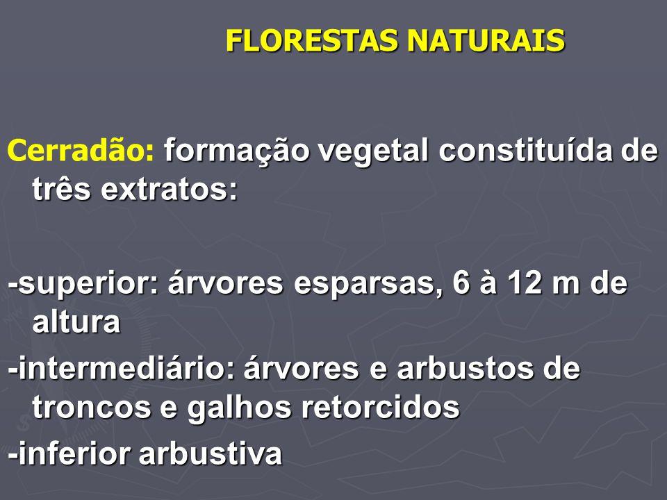 -superior: árvores esparsas, 6 à 12 m de altura