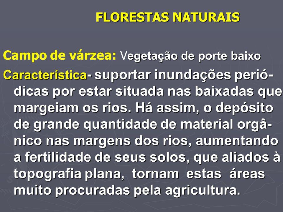 FLORESTAS NATURAIS Campo de várzea: Vegetação de porte baixo.