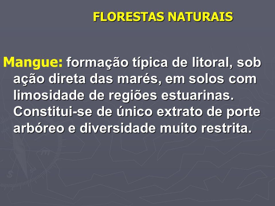 FLORESTAS NATURAIS