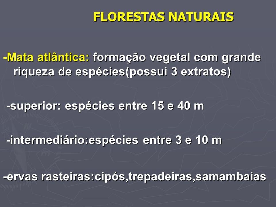 FLORESTAS NATURAIS -Mata atlântica: formação vegetal com grande riqueza de espécies(possui 3 extratos)