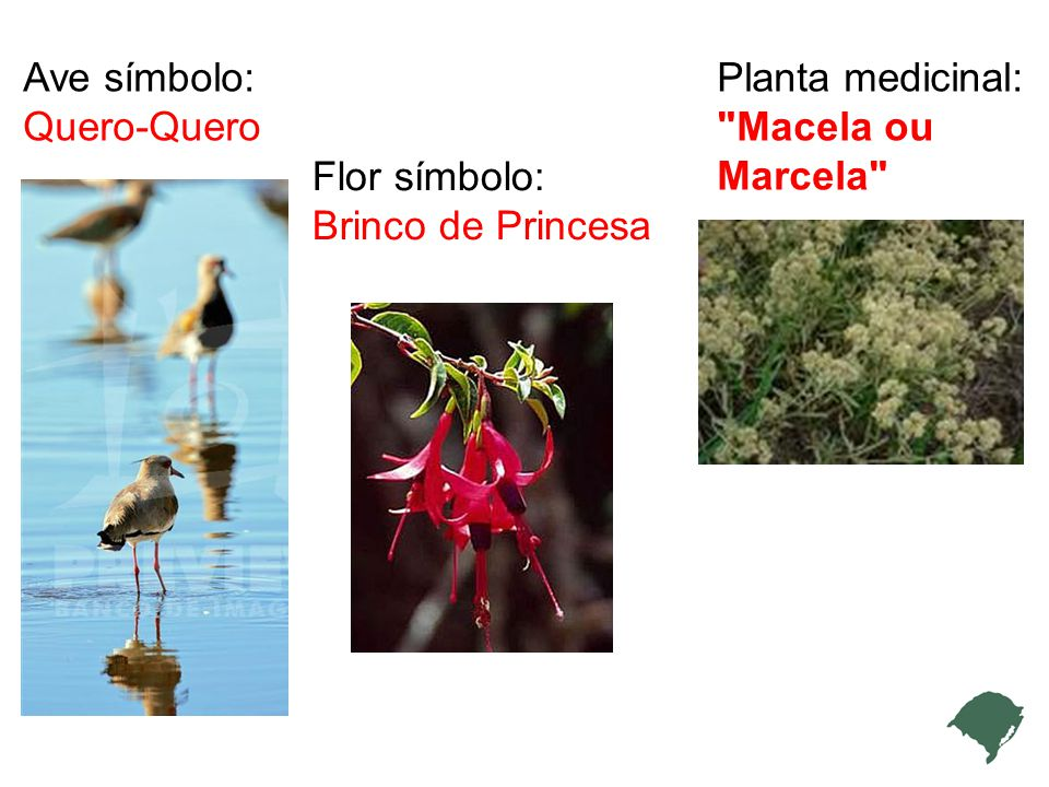 Ave símbolo: Quero-Quero Planta medicinal: Macela ou Marcela Flor símbolo: Brinco de Princesa