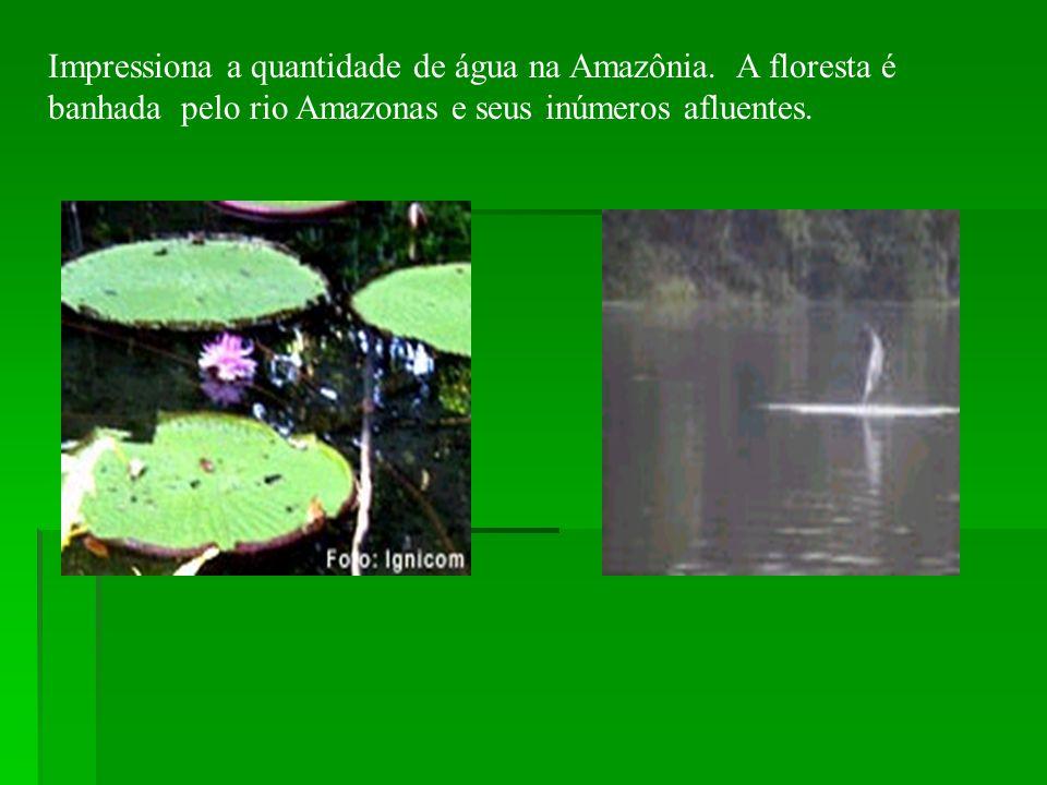 Impressiona a quantidade de água na Amazônia