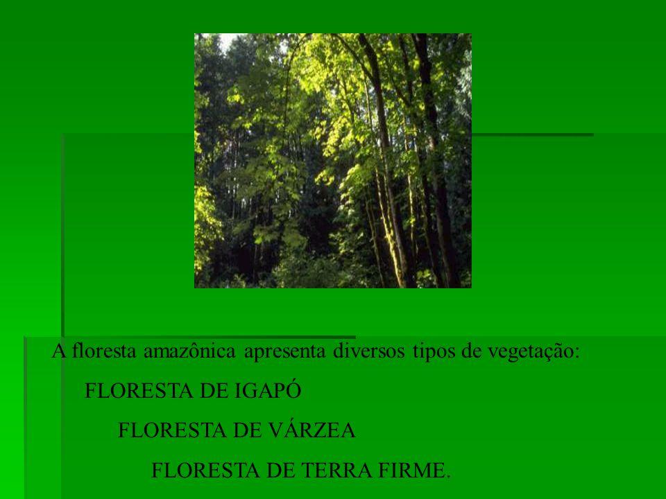 A floresta amazônica apresenta diversos tipos de vegetação: