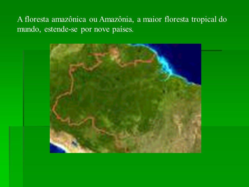 A floresta amazônica ou Amazônia, a maior floresta tropical do mundo, estende-se por nove países.