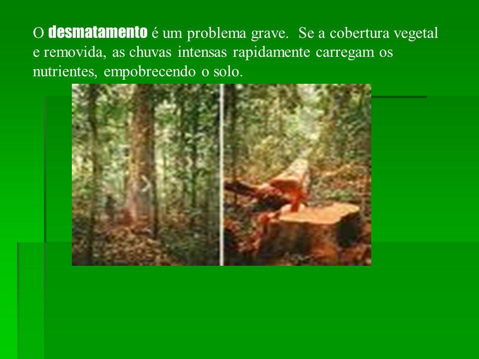 O desmatamento é um problema grave