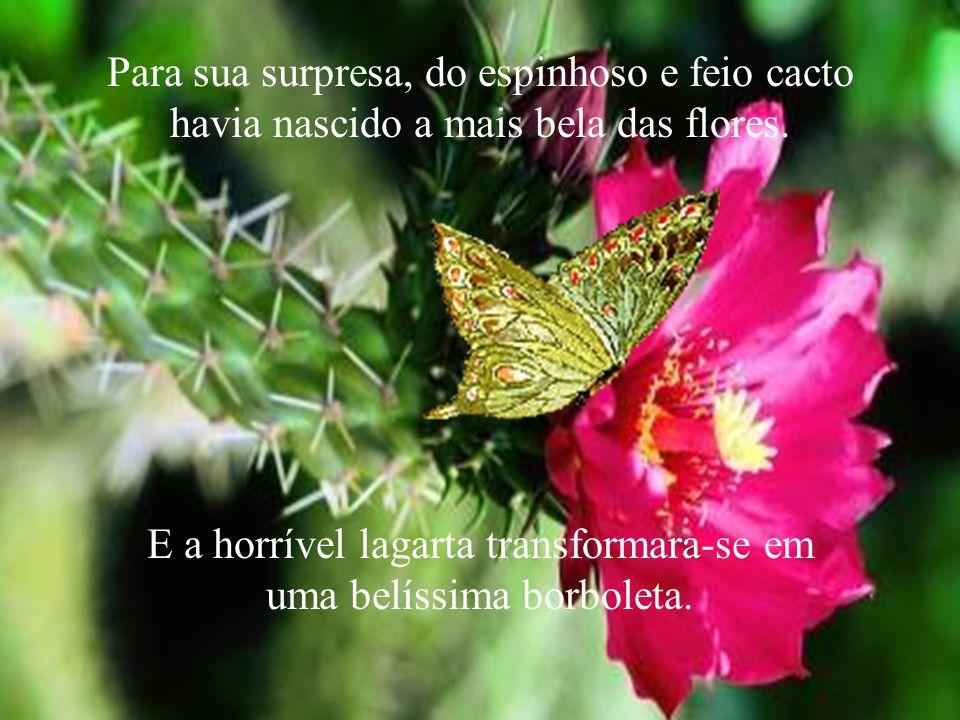 E a horrível lagarta transformara-se em uma belíssima borboleta.