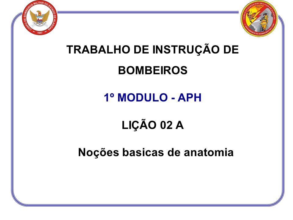 TRABALHO DE INSTRUÇÃO DE BOMBEIROS Noções basicas de anatomia