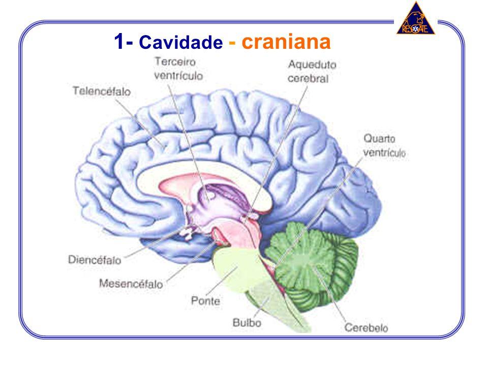1- Cavidade - craniana
