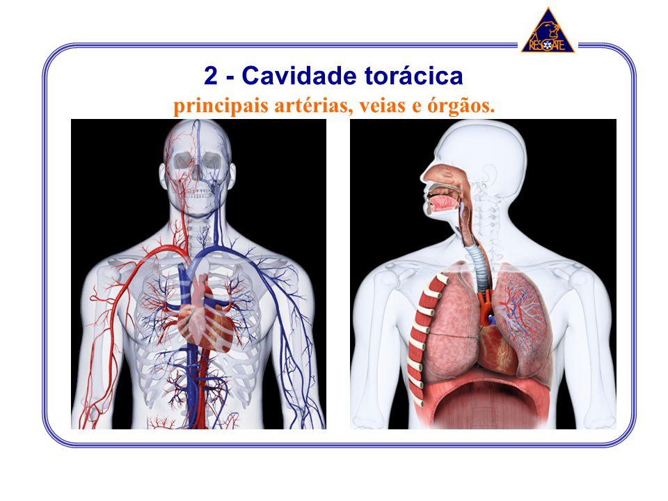 principais artérias, veias e órgãos.