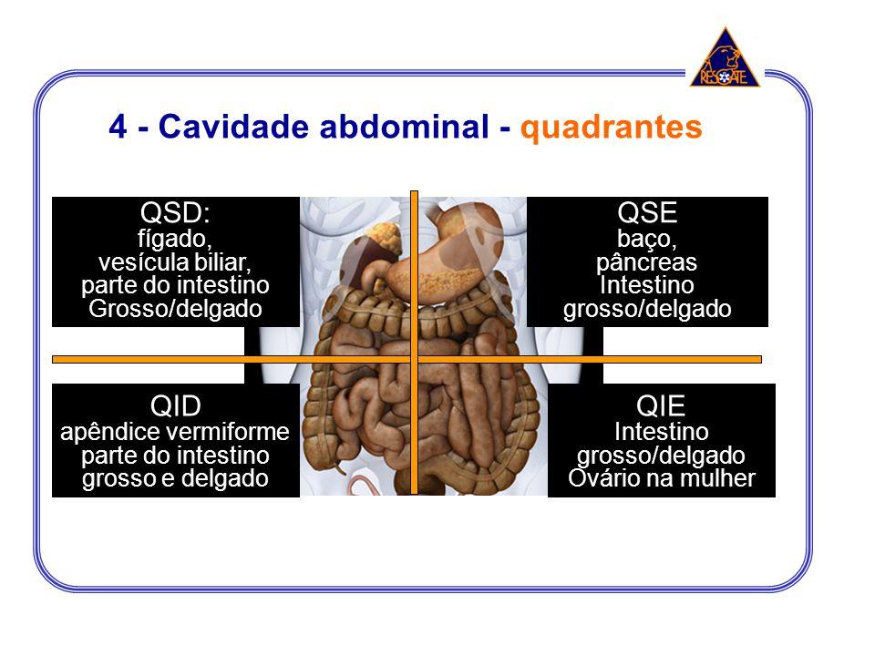 4 - Cavidade abdominal - quadrantes