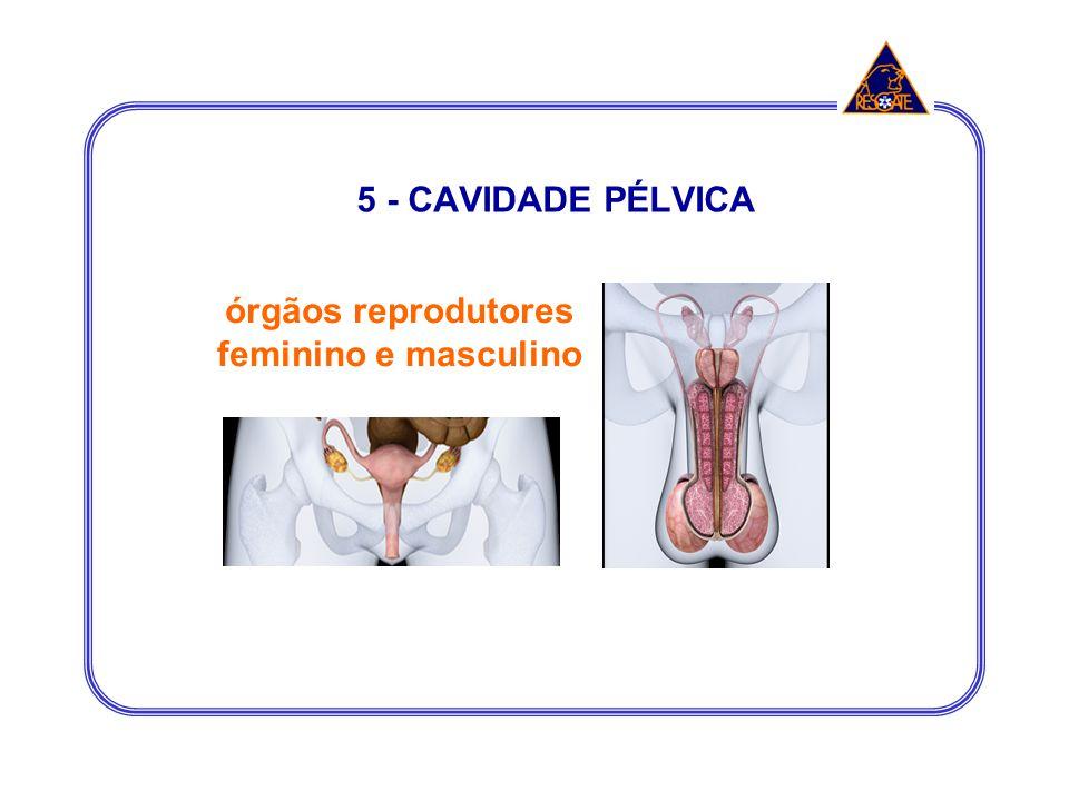 órgãos reprodutores feminino e masculino