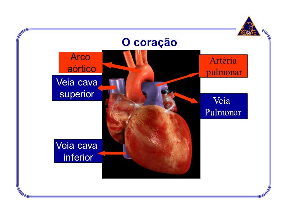 O coração Arco Artéria aórtico pulmonar Veia cava superior Veia