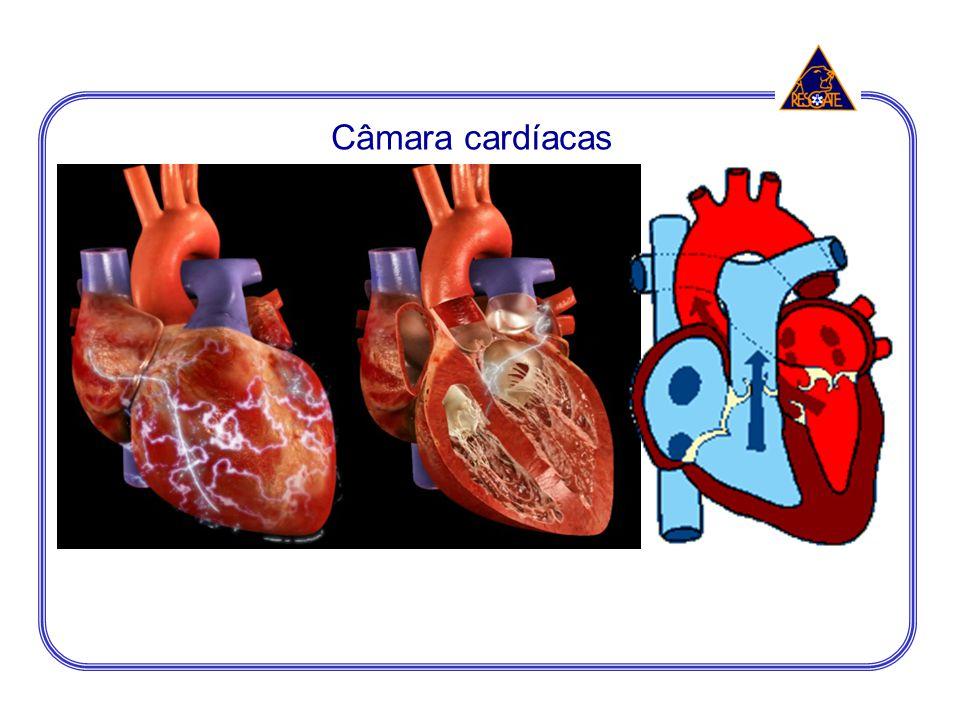 Câmara cardíacas