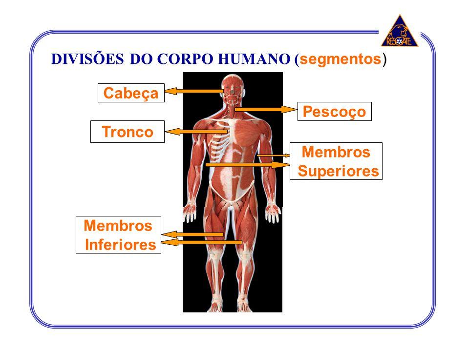 DIVISÕES DO CORPO HUMANO (segmentos)