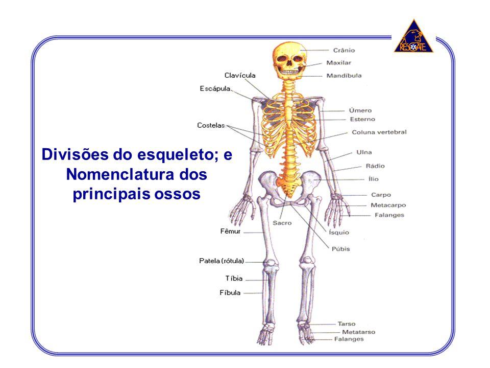 Divisões do esqueleto; e Nomenclatura dos principais ossos