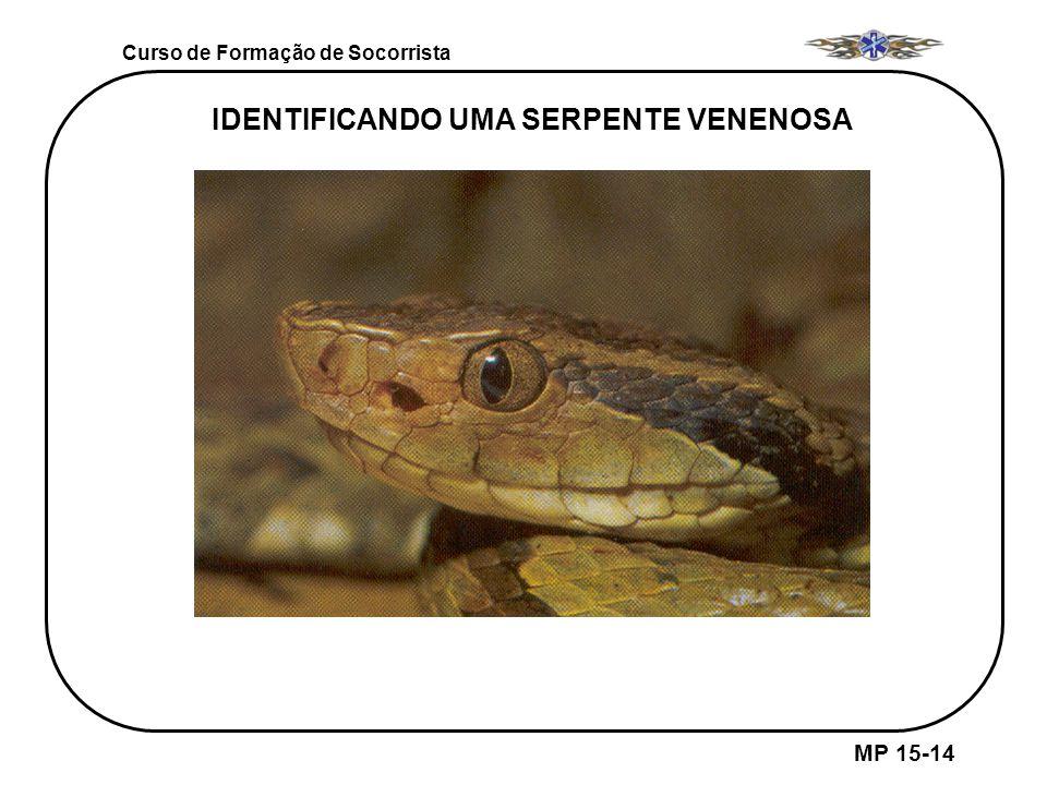IDENTIFICANDO UMA SERPENTE VENENOSA