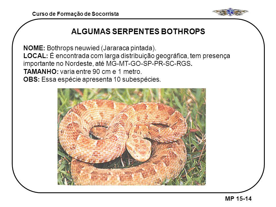 ALGUMAS SERPENTES BOTHROPS