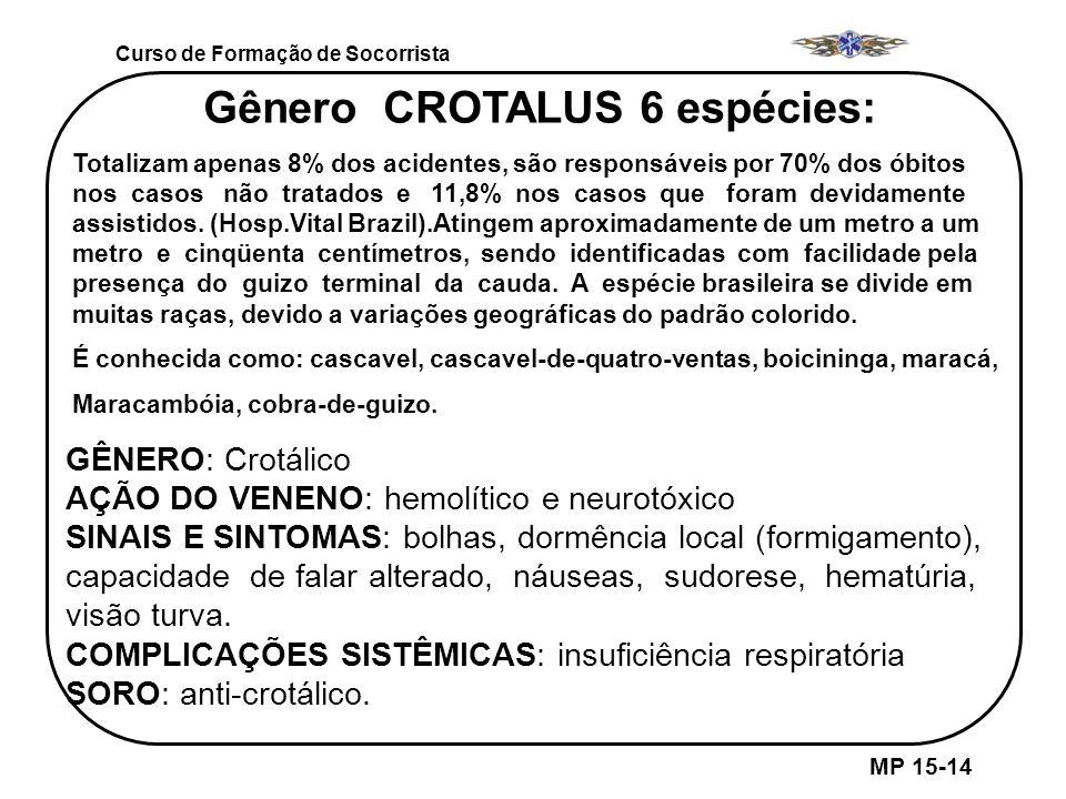 Gênero CROTALUS 6 espécies: