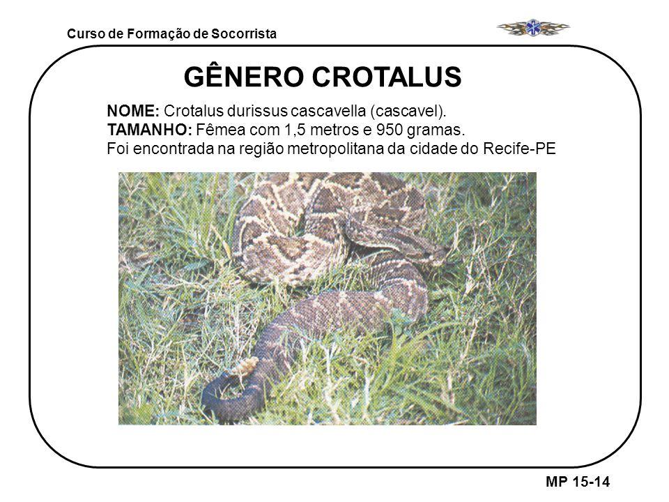 GÊNERO CROTALUS NOME: Crotalus durissus cascavella (cascavel).