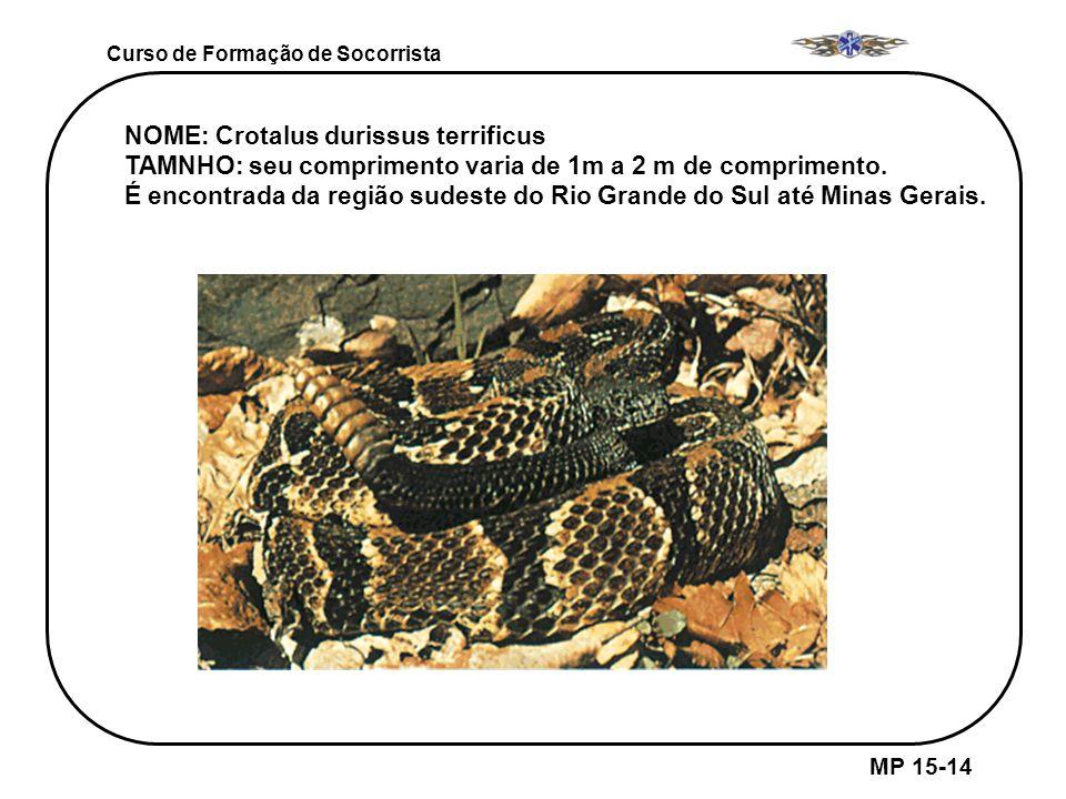 NOME: Crotalus durissus terrificus