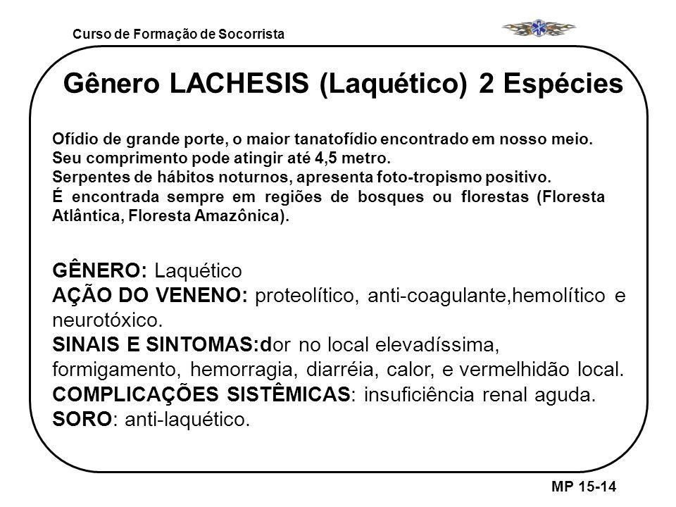 Gênero LACHESIS (Laquético) 2 Espécies