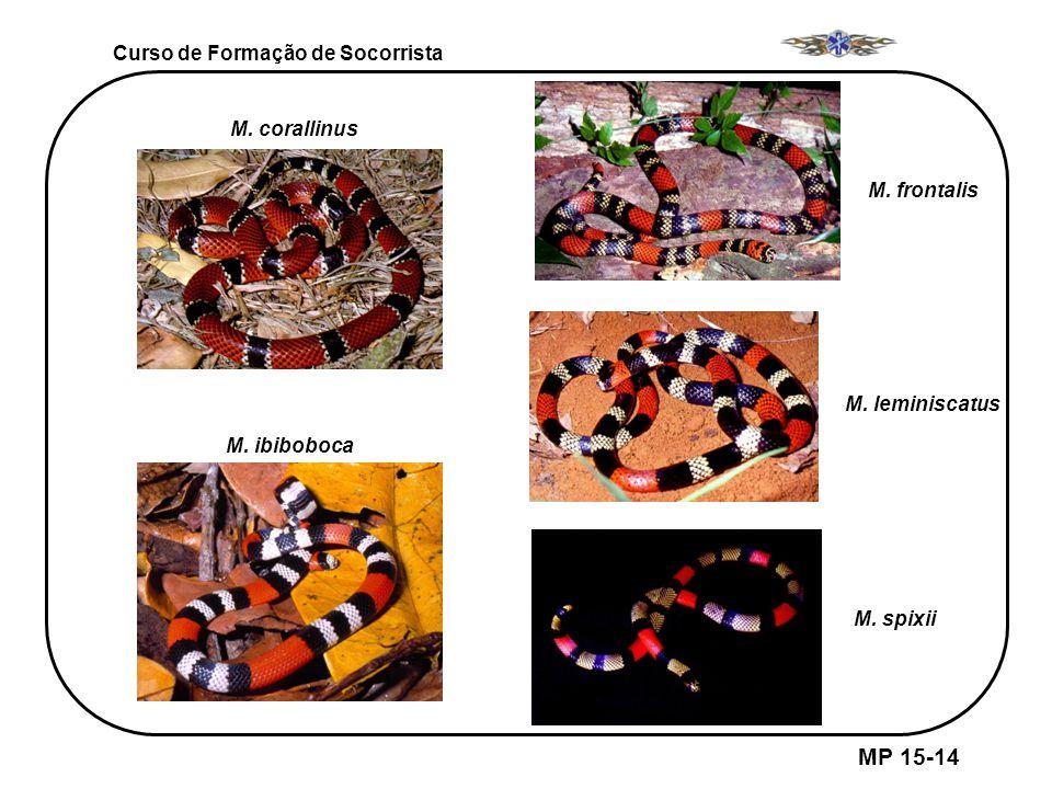 MP 15-14 Curso de Formação de Socorrista M. corallinus M. frontalis