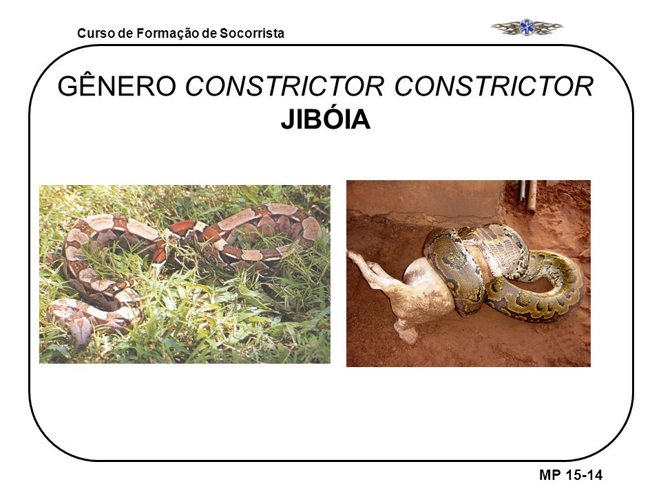 GÊNERO CONSTRICTOR CONSTRICTOR