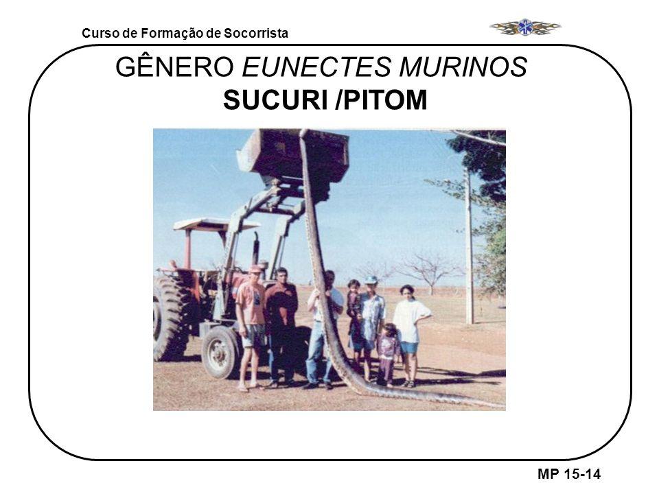 GÊNERO EUNECTES MURINOS