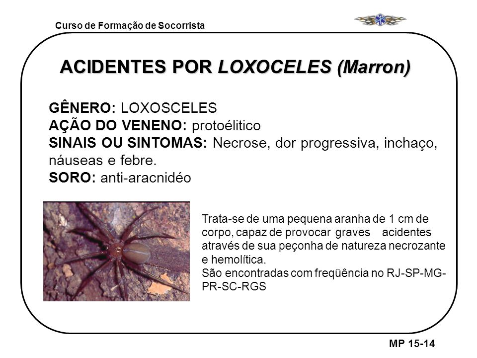 ACIDENTES POR LOXOCELES (Marron)