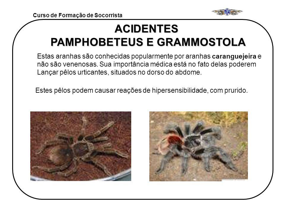ACIDENTES PAMPHOBETEUS E GRAMMOSTOLA