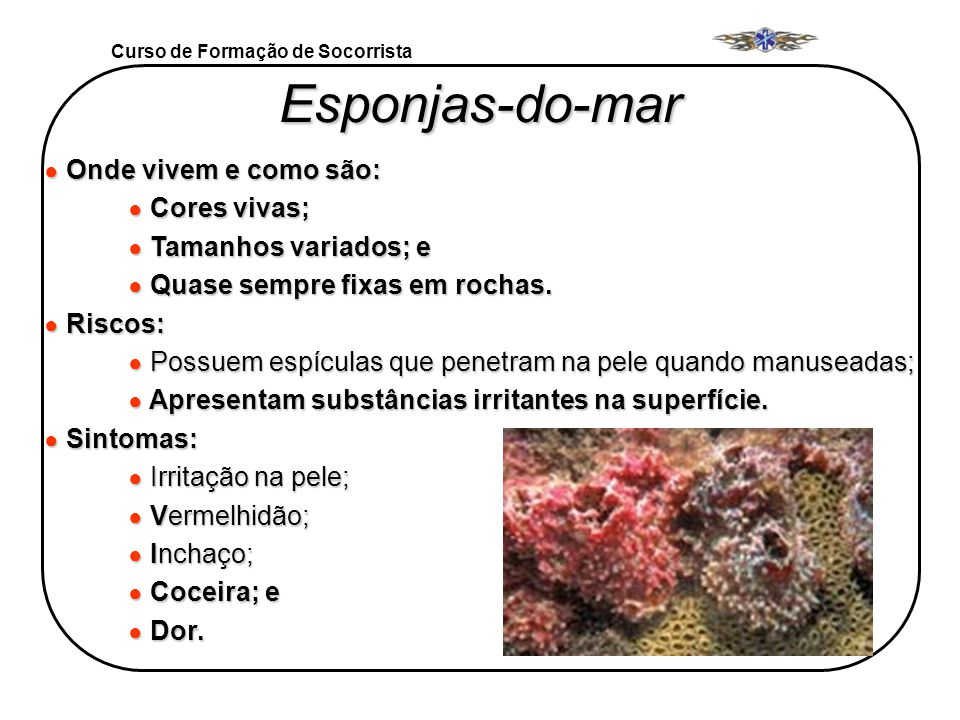 Esponjas-do-mar Onde vivem e como são: Cores vivas;