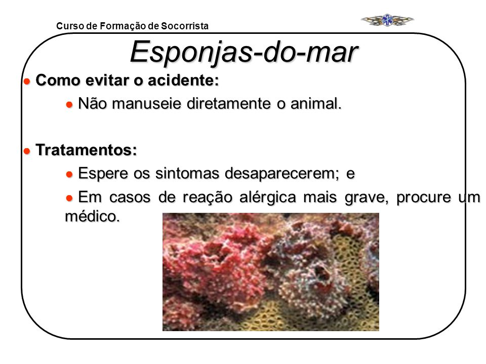 Esponjas-do-mar Como evitar o acidente: