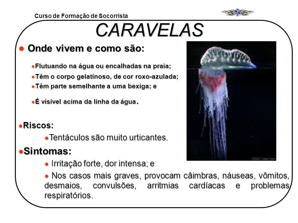 CARAVELAS Onde vivem e como são: Sintomas: Riscos: