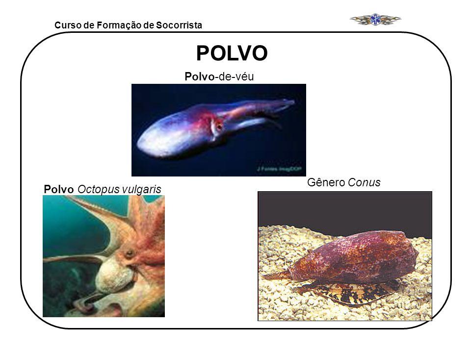 POLVO Polvo-de-véu Gênero Conus Polvo Octopus vulgaris