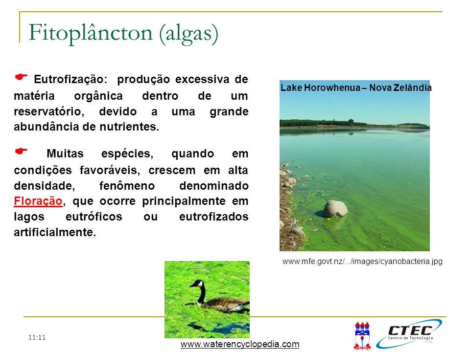 Fitoplâncton (algas)