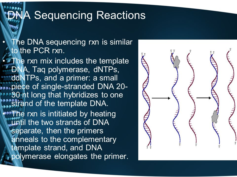 DNA Sequencing Reactions