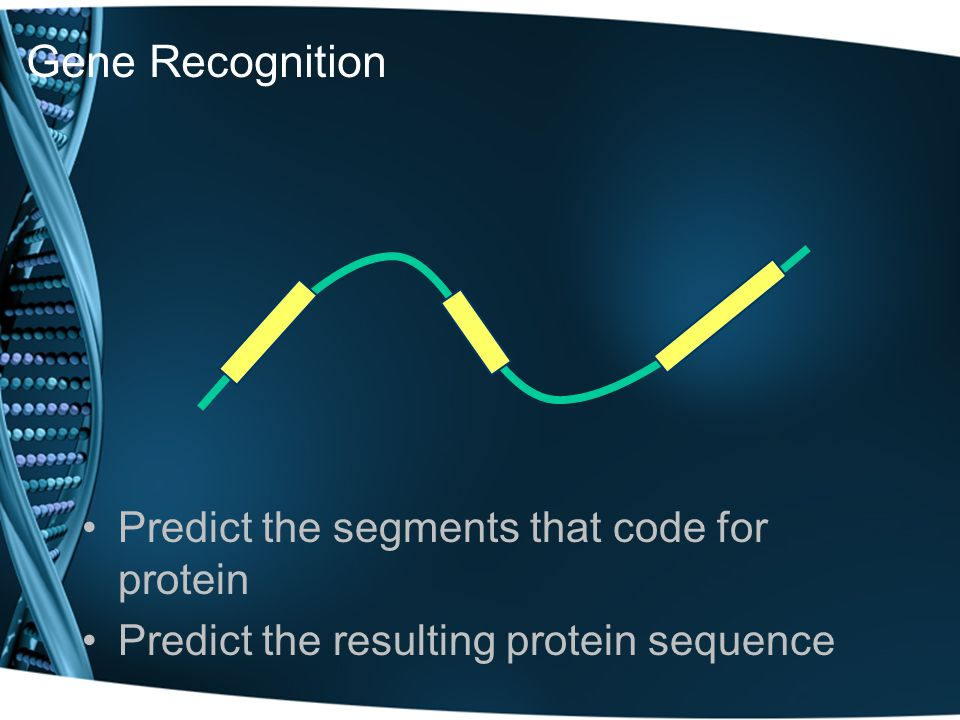Gene Recognition Predict the segments that code for protein