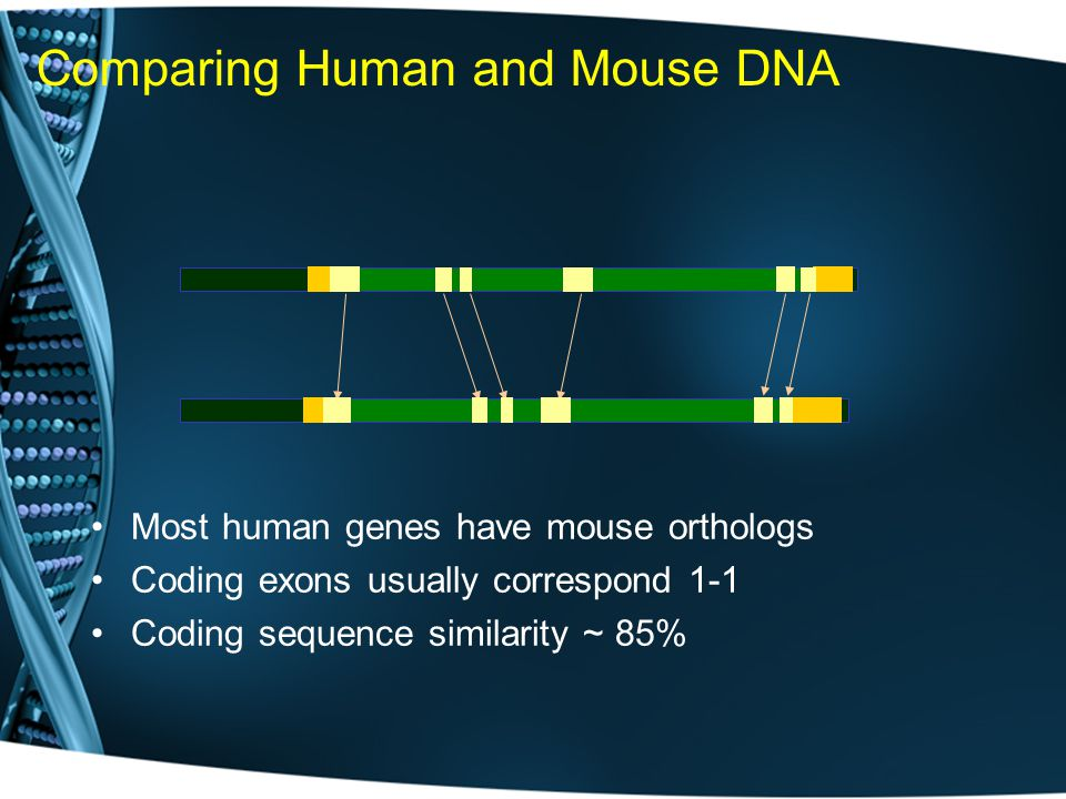 Comparing Human and Mouse DNA