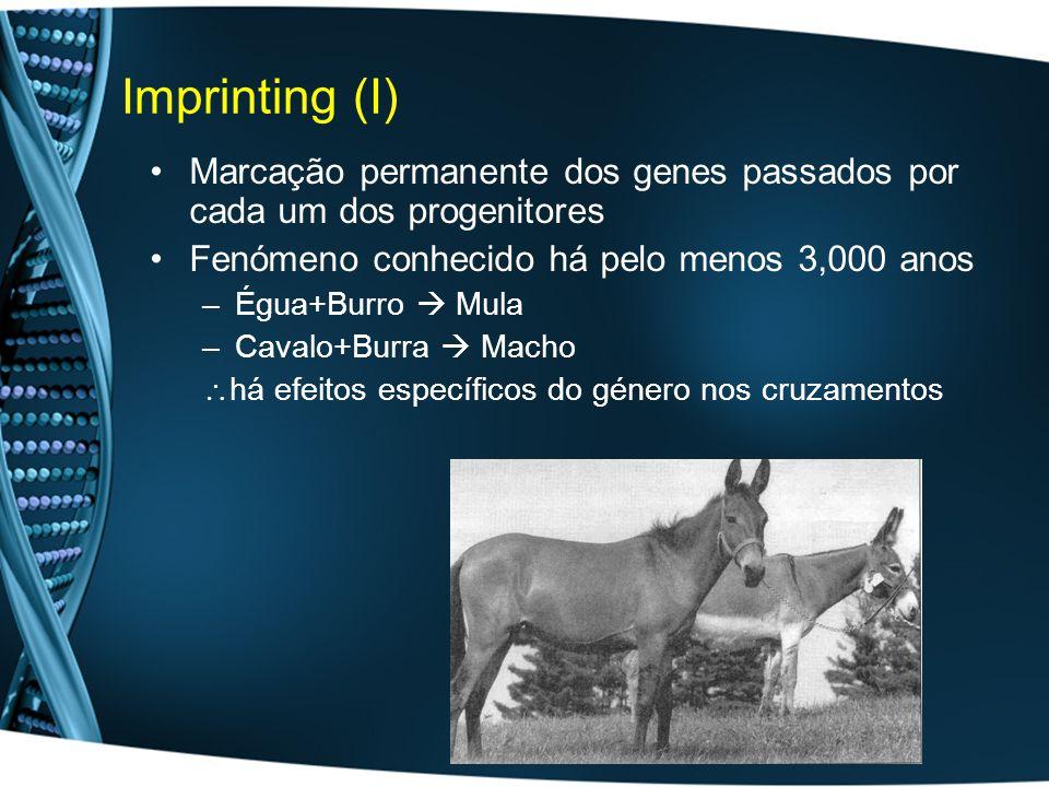 Imprinting (I) Marcação permanente dos genes passados por cada um dos progenitores. Fenómeno conhecido há pelo menos 3,000 anos.