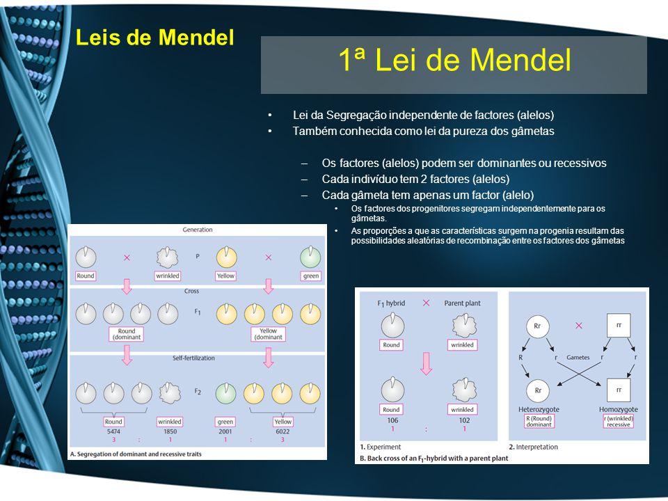 1ª Lei de Mendel Leis de Mendel